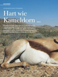 Hart wie Kameldorn … - Wild und Hund