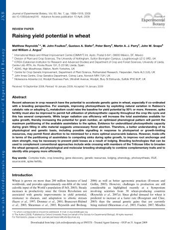 Raising yield potential in wheat - Search CIMMYT repository