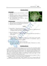 Krizantēmu slimības - Onava.lv