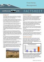 Download Feral horse management - Australian Alps National Parks
