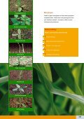 PDF download - Bayer CropScience - Page 7