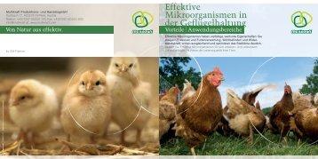 Effektive Mikroorganismen in der Geflügelhaltung - Multikraft
