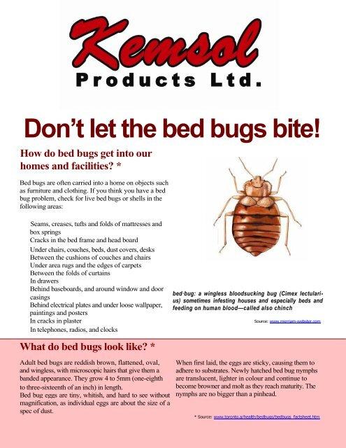 Don T Let The Bed Bugs Bite Kemsol