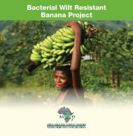 Improvement of banana project brief - African Agricultural ...