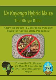 Ua kayongo Maize - African Agricultural Technology Foundation