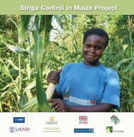 Striga control in maize - African Agricultural Technology Foundation