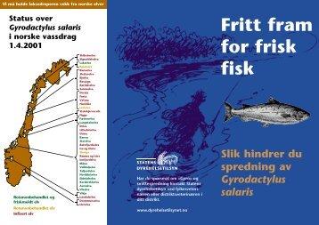 Fritt fram for frisk fisk Slik hindrer du spredning av Gyrodactylus salaris