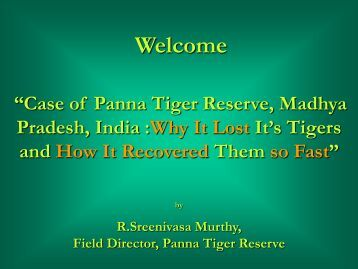 Panna Tiger Reserve… How Tigers were Recovered So Fast