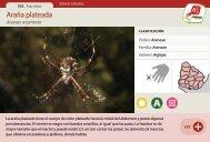 Araña plateada - Manosanta