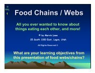 Food Chains / Webs