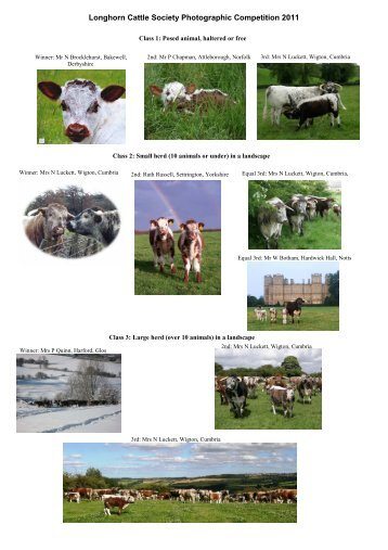 Photo comp 2011 winners - Longhorn Cattle Society