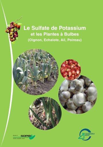 Le Sulfate de Potassium et les Plantes à Bulbes - Tessenderlo Group