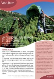 Viticulture - Wine growing - Pays Sud Bourgogne