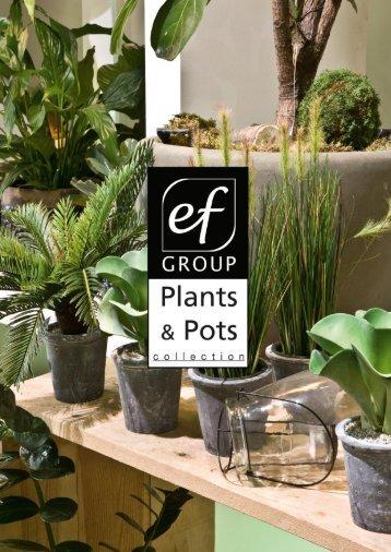 Plants & Pots 2015