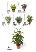 Plants & Pots 2015 - Page 4