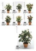 Plants & Pots 2015 - Page 6