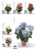 Plants & Pots 2015 - Page 7
