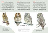 Lae alla kodukaku infovoldik - Eesti ornitoloogiaühing