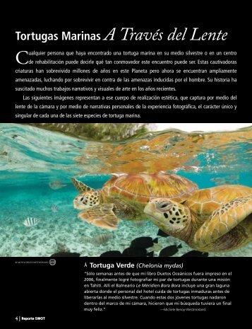 Tortugas Marinas A Través del Lente