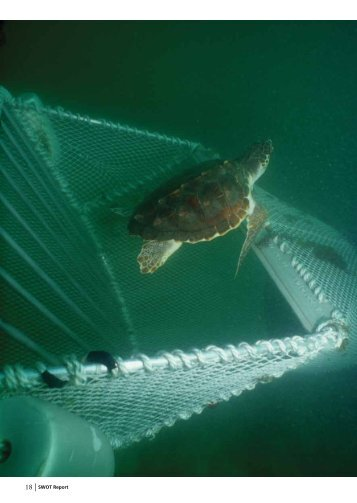 18 | SWOT Report - The State of the World's Sea Turtles