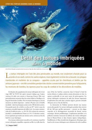 L'état des tortues imbriquées dans le monde