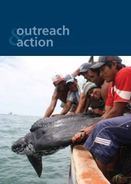 outreach action - The State of the World's Sea Turtles