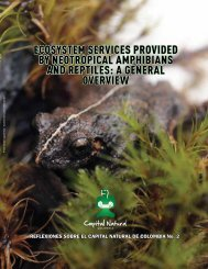 ecosystem services provided by neotropical amphibians and reptiles