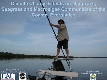 Climate Change Effects on Mangrove, Seagrass and Macroalgae ...