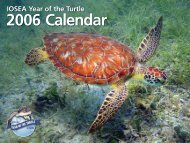IOSEA Year of the Turtle - Indian Ocean - South-East Asian Marine ...