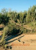 01 Chaco Alto DE.qxd - Page 2