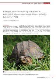 Biologia, allevamento e riproduzione in cattività di Kinosternon ...