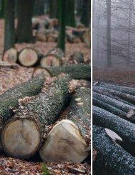 Erntedank im Wald (Landlust 2/10) - Arborena