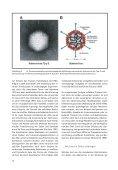 Viren, blinde Passagiere der Zellen - Forschung für Leben - Page 4