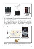 Viren, blinde Passagiere der Zellen - Forschung für Leben - Page 7