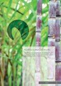 das Geschirr der Natur organic Foodpackaging - Seemann ... - Seite 2