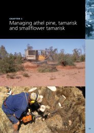 Managing athel pine, tamarisk and smallflower ... - Weeds Australia