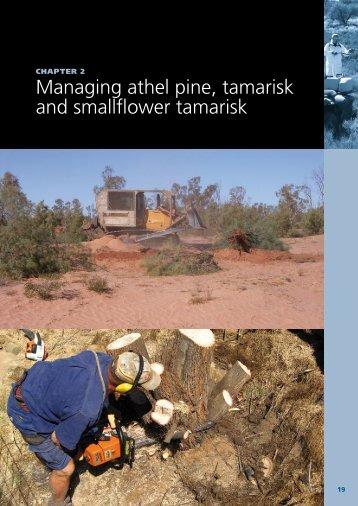 Managing athel pine, tamarisk and smallflower ... - Weeds Australia