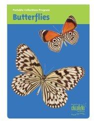 Butterflies - Brooklyn Children's Museum