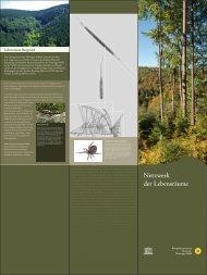 Lebensraum Bergwald - Biosphärenreservat Vessertal-Thüringer Wald