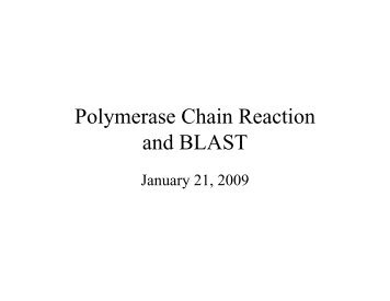 Polymerase Chain Reaction and BLAST