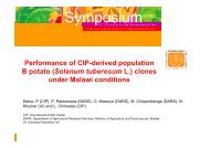 Demo, P.; Performance of CIP-derived population B3 potato