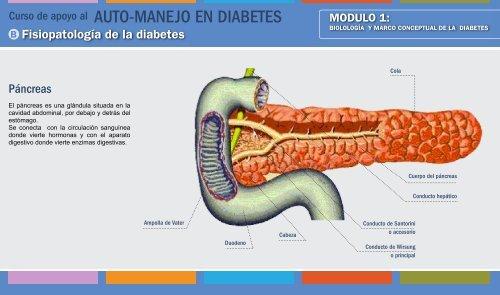 La hidrólisis de la maltosa producirá glucosa y diabetes.