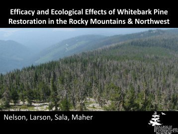 Efficacy and Ecological Effects of Whitebark Pine Restoration in the ...