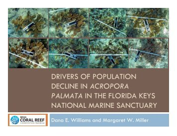 drivers of population decline in acropora palmata in the florida keys ...