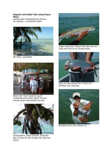 Rapport och bilder från camp Pesca Maya ... - FishingNorth.com