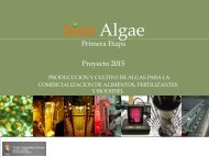 bion Algae Proyecto 2015