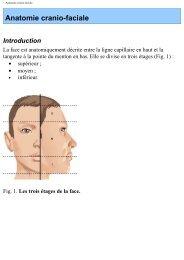 Chapitre 1 Anatomie cranio-faciale - UMVF