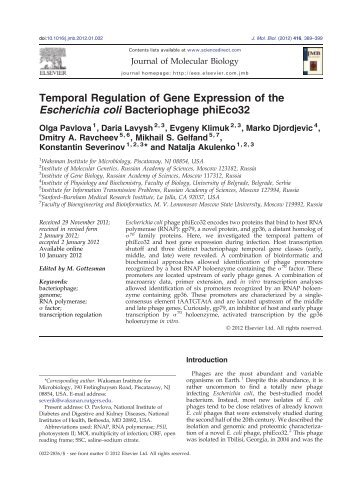 Temporal Regulation of Gene Expression of the Escherichia coli ...