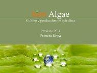 bion Algae