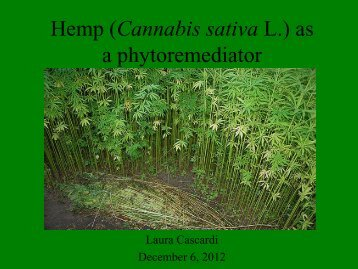 Phytoremediation with hemp by Laura Cascardi